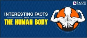 human-body-facts