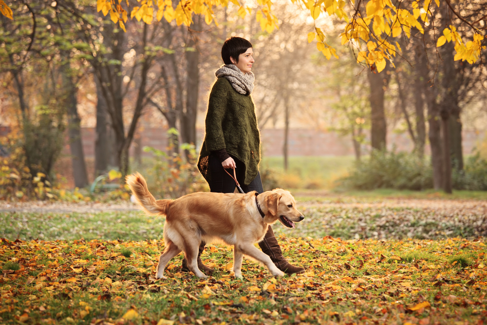 3 Crucial Tips For Dog Walkers